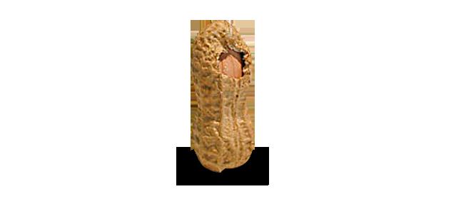 Astronut Nut Armstrong